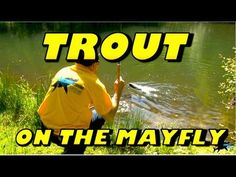 How to catch Trout on the Mayfly – Totally Awesome Fishing Show