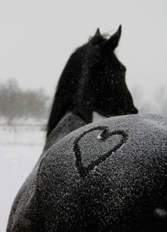 www.lacavalieremasquee.com | My heart goes to horses...