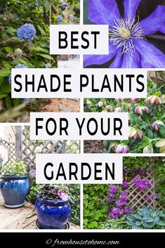 This list of the best shade loving shrubs and perennials is awesome! There are lots of plant options for containers, to grow under trees and that are low maintenance to cover any shade garden landscaping possibilities. #fromhousetohome #gardening #gardenideas #shade #plants #shadeplants