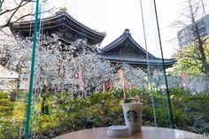 Japaninfo added 29 new photos to the album: จิบกาแฟ Starbucks ชม Miyuki-zakura@วัด Rokkaku-do,Kyoto/2 เมษา — at 頂法寺.