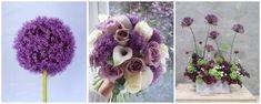 allium - floarea de usturoi - flori in culoarea anului 2018: ultraviolet Plants, Blog, Blogging, Plant, Planets
