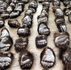 $460,000 worth of bear paws Chinese authorities arrested two suspects who tried to smuggle 213 severed bear paws to be sold on the black market in China. MAKE CHINA STOP THIS!!