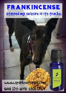 Frankincense stopped a seizure our greyhound was having immediately! Yl Oils, Doterra Essential Oils, Young Living Oils, Young Living Essential Oils, Essential Oils Dogs, Sleeping Animals, Coconut Oil For Dogs, Oils For Dogs