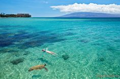 Waters of Maui - swimming with the Honu!