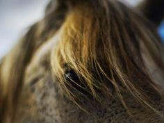 Les fonds d'écran - L'oeil d'un cheval