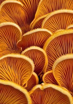Weird and Wonderful Fungi Pictures - The Photo Argus Mushrooms - natural form texture and colour inspirationsMushrooms - natural form texture and colour inspirations Natural Forms, Natural Texture, Texture In Art, Plant Texture, Rug Texture, Brown Texture, Visual Texture, Natural Shapes, Gold Texture