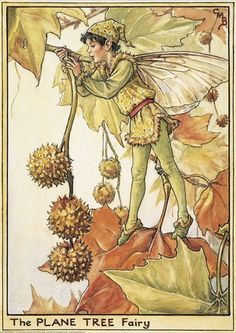 Illustration for the Plane Tree Fairy from Flower Fairies of the Winter. A boy…