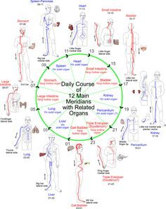 Daily Meridians Circuit