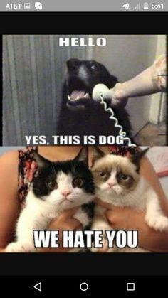 Grumpy cat  again hahaha