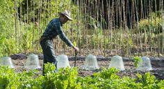 Potager bio : 10 conseils d'Yves Gillen, jardinier bio depuis 40 ans