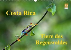 Costa Rica - Tiere des Regenwaldes - CALVENDO Kalender von Akrema Photography - #calvendo #calvendogold #kalender #fotografie #regenwald #tiere #tierfotografie