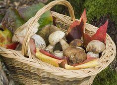 Les champignons : apprendre à les reconnaître, les cueillir, les cuisiner - Reconnaître les champignons