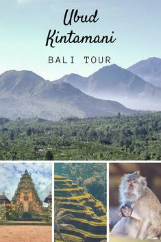 Bali Ubud and Kintamani tour package, full day Bali itinerary to see Bali volcano and to visit the best attractions around Ubud town. One-day Bali driver hire and Bali tour service