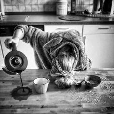 Are you looking for ideas for good morning coffee?Browse around this site for perfect good morning coffee ideas. These entertaining pictures will make you happy. Coffee Humor, Coffee Quotes, I Love Coffee, My Coffee, Monday Coffee, Coffee Pics, Coffee Ideas, Really Funny, Super Funny