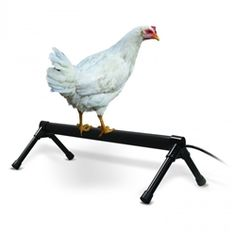 K&H Thermo-Chicken Perch is a heated perch to keep your chickens and poultry warm in cold weather.  They will gravitate to the warmth!