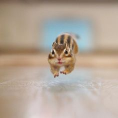 I got to get the hell out of here & in a hurry! I stole some nuts! (: