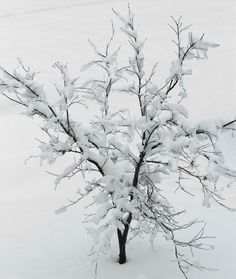 Heavy Snow by Joe Matzerath on 500px