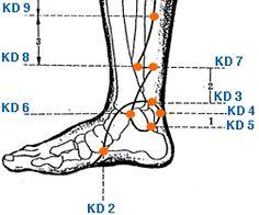 Kidney Foot & Lower Leg