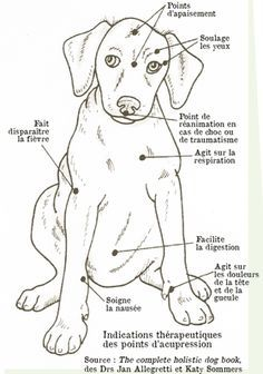Practice acupressure for your dog - suinoel - - Pratiquer l'acupression pour son chien To practice acupressure for his dog – Osteopathy and acupressure for dogs – Wamiz Merle Australian Shepherd, Animals And Pets, Cute Animals, Massage, Amor Animal, Baby Dogs, Dog Care, Dog Mom, I Love Dogs