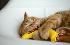 "Waffles from @GLOGIRLY with his banana from Pet Box! He named it ""Fred""..."