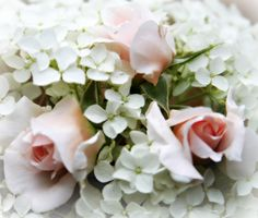 For the love of white: Pretty Pictures, Pretty Blog