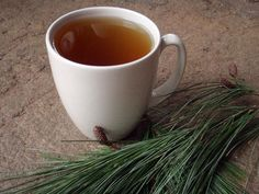 Survival Skills: 4 Wild Teas Every Survivalist Should Know | Outdoor Life Survival