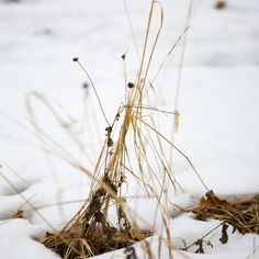 Dry grass - null
