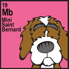 Mini Saint Bernard Saint Bernard x Cocker Spaniel)