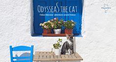 Odysseas the cat on Discover Greece Blog http://blog.discovergreece.com