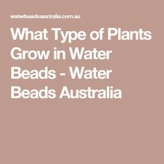 What Type of Plants Grow in Water Beads - Water Beads Australia