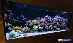 Wesley Vreeswijk is the Ultimate Reefing Control Freak - Reef Builders