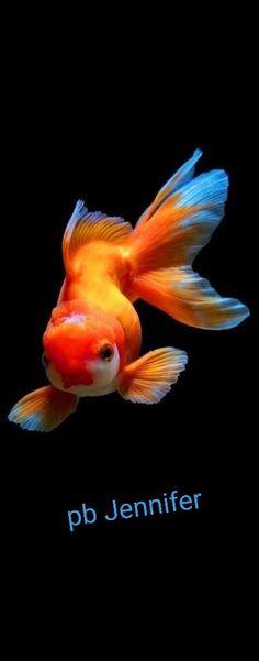 Jennifer Coral Aquarium, Pets, Animals, Animales, Animaux, Animal, Animais, Animals And Pets