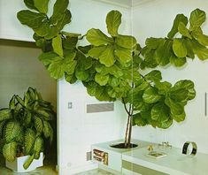 "Steffan on Instagram: ""The Complete Book of Houseplants & Indoor Gardening by Edwin M. Steffek, 1976. #houseplants #plants #botanical #fig #figtree…"""