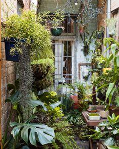 Urban Garden Design David Whitworth — The Design Files Small Cottage Garden Ideas, Small Garden Design, Garden Cottage, Backyard Cottage, Garden Bar, Garden Studio, Small Courtyard Gardens, Back Gardens, Small Gardens