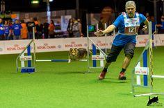 https://flic.kr/p/CPTGum | Dmitri Kargin mit Stenley | AWC 2015 - Team Jumping Small