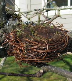 how to make natural looking bird's nest with material from the dollar store