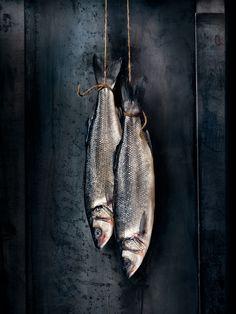 Sea Bass -Moody © Rob Fiocca - Fiocca Studio www.fioccastudio.com