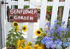 Hydrangeas , sunflowers and a simple little garden sign.