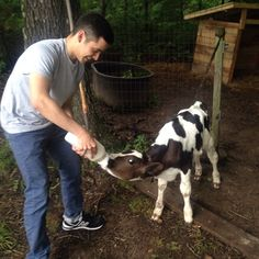 David Archuleta. Instagram June 6, 2015. Been spending a lot of time outdoors this week.  Hung out with this little guy.  First time feeding a calf, and they chug that stuff down in seconds.  #theoutdoors #alsogotbitbyatick