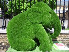 Cute #elephant #topiary / gardenart
