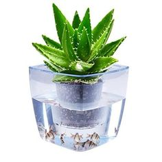 Aquaponics Self Watering Planter  The Relaxed Lifestyle