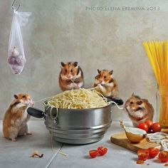fans of spaghetti by Elena Eremina on 500px