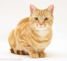 gato - Buscar con Google
