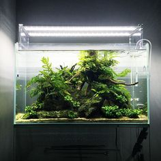 【tsunoshu】さんのInstagramをピンしています。 《I cleaned the aquarium for the first time in four months 4ヶ月ぶりに事務所水槽を掃除 ちょっと流木の向きを変えて真ん中に洞窟作ってみました二酸化炭素も数ヶ月切れてたようですが、陰性水草だけなので意外と綺麗です✨ . #natureaquarium #aquarium #fish #waterplants #driftwood #watertank #aquascape #ada #aquadesignamano #水草 #水草水槽 #ネイチャーアクアリウム #アクアリウム #水槽 #熱帯魚 #陰性水草 #流木 #水草レイアウト》