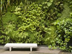 Wildly textural shady vertical wall planting at The Ken Club in Paris, France. Designed by Patrick Blanc. Green Landscape, Landscape Design, Garden Design, Vertical Garden Plants, Vertical Gardens, Green Facade, Plant Shelves, Potting Soil, Plant Wall