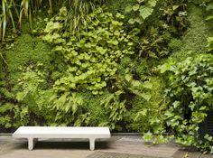Les murs végétalisés rencontrent un succès extraordinaire depuis que leur inventeur, Patrick...