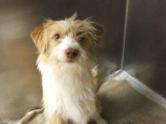 The Humane Society of Missouri's St. Louis area adoption centers feature dogs, cats, puppies, kittens, rabbits and many other pets to adopt!