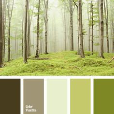 brown and green colors, color of autumn, color of fog, color of forest, color of rain, color solution, colors of foggy forest, dark gray color