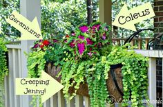 MUST read post for choosing The Easiest and Best Plants for Hanging Baskets by 3 Little Greenwoods! #DIYflowerBasket #hangingflowerbaskets #bestplantsforhangingbaskets