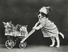 vintage cats& dog dressed pictures - Google Search